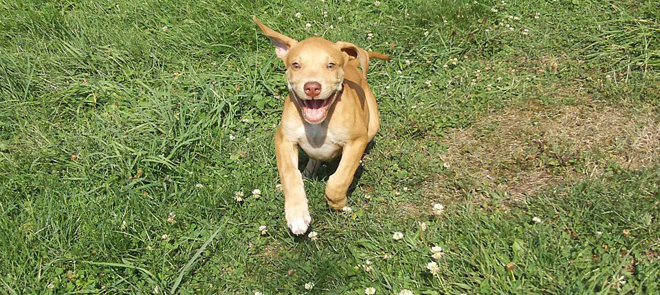 Dogs To Adopt In Central Pa